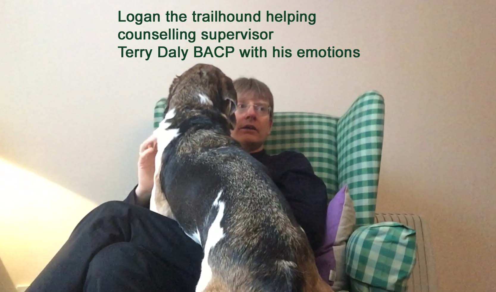 therapy fr dog owners and counsellors