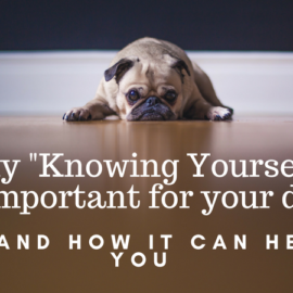 "Why ""Knowing Yourself"" is important to your dog"