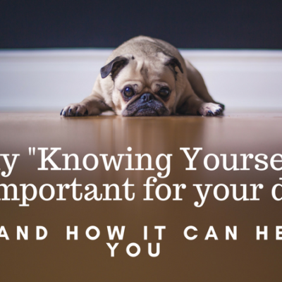 Why knowing yourself is important to your dog (courtesy Matthew Henry www.unsplash.com