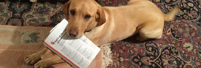 Labrador, Psychologies Magazine