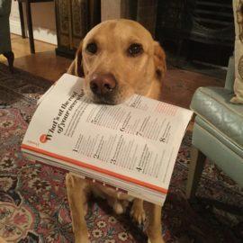 Labrador with copy of Psychologies Magazine
