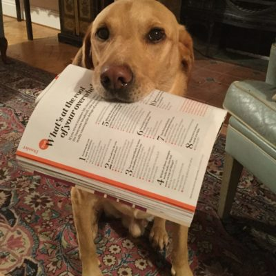 Labrador with copy of Psychologies Magazine
