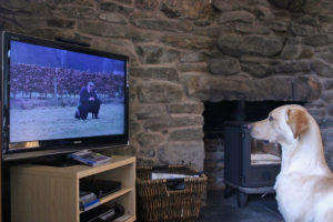 Labrador watching dog training on TV